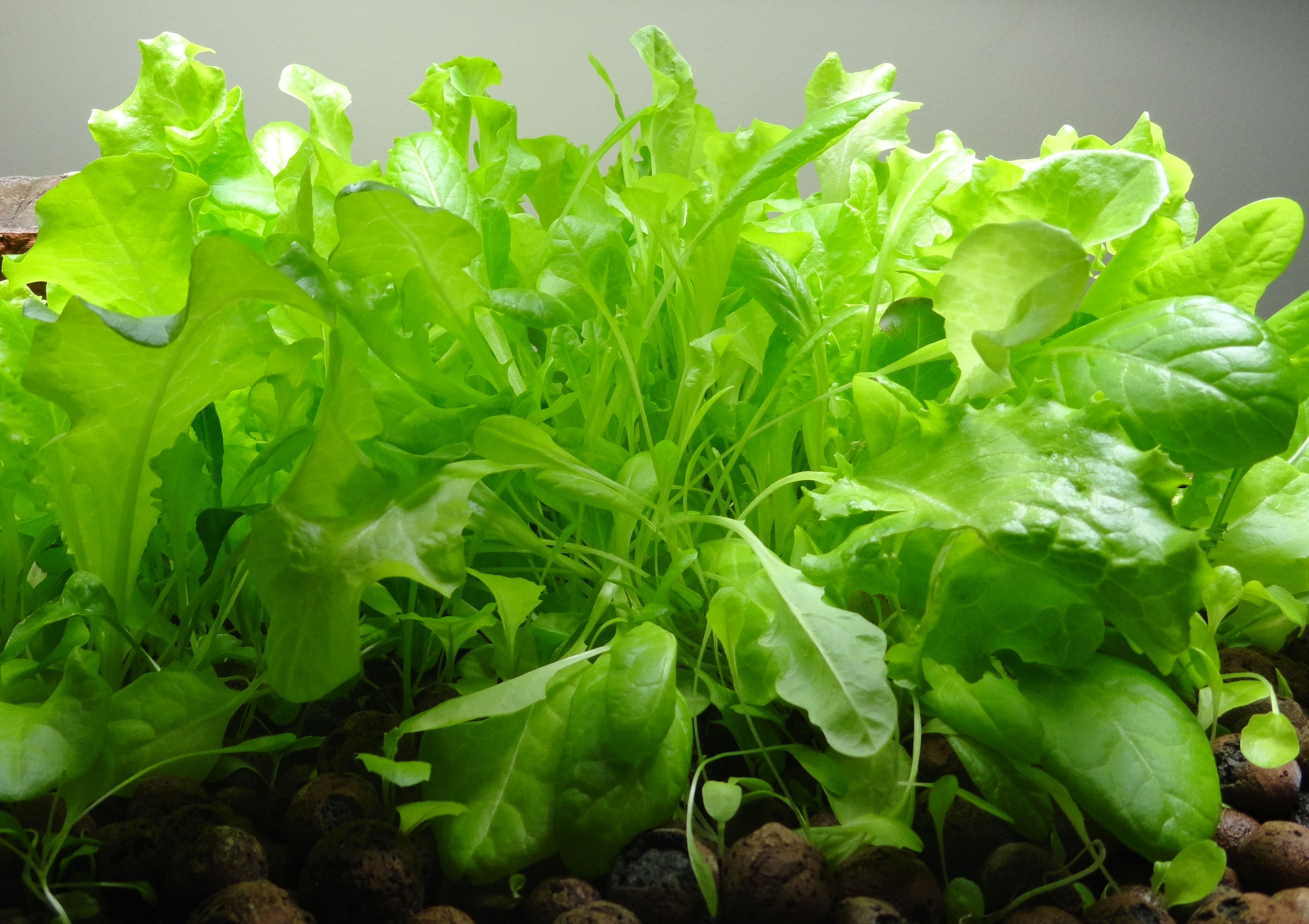 Build An Aquaponics Farm With Your Fish Tank