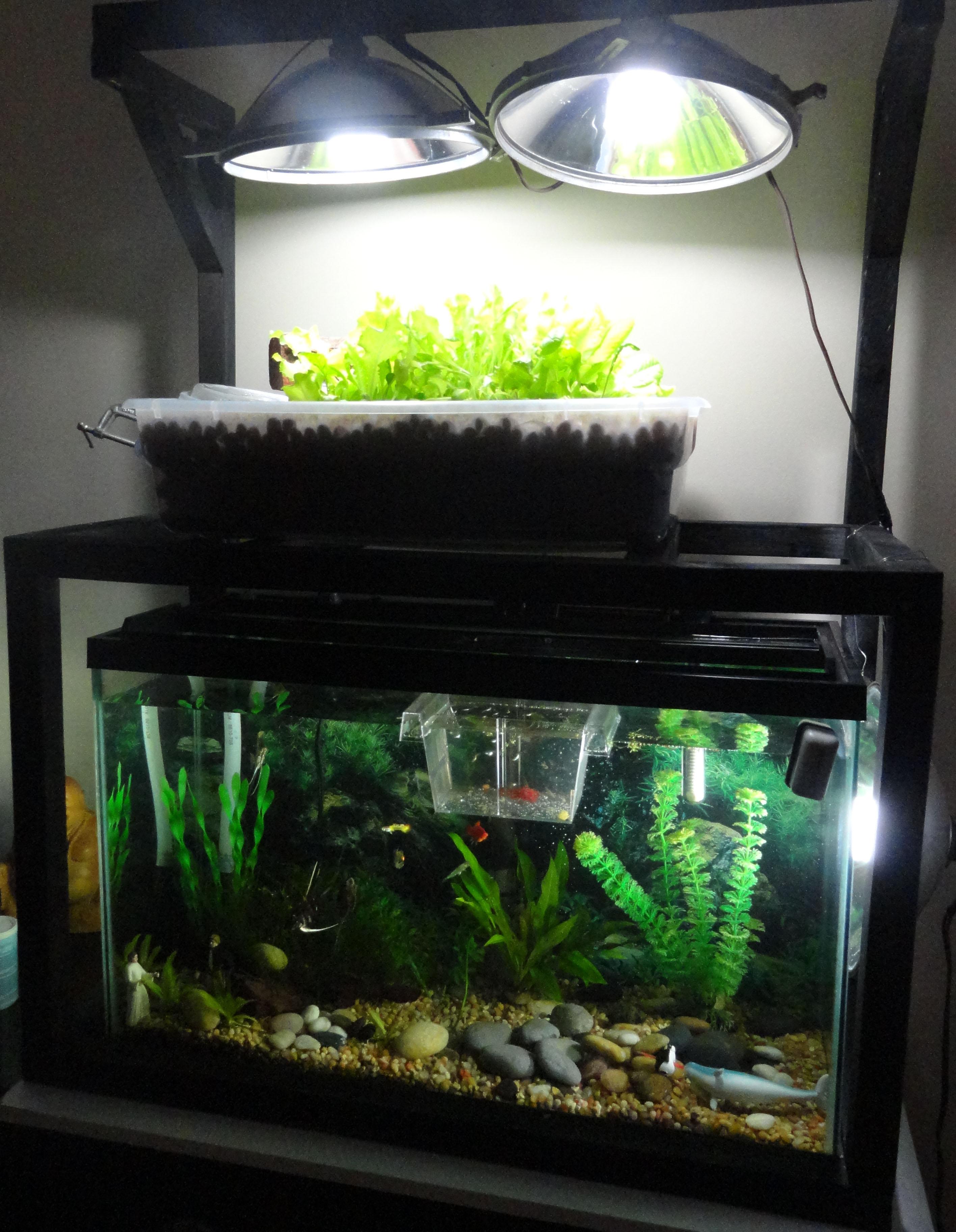 Where Can I Buy A Tiny House >> Aquaponics DIY