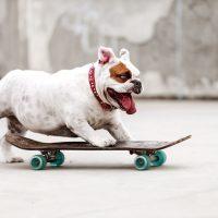 Dog skateboarding