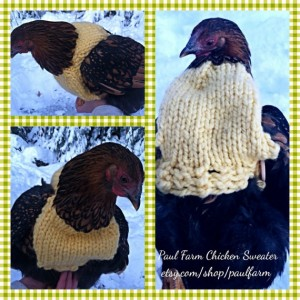 DIY Christmas Chicken Sweaters
