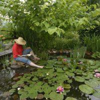 DIY garden ponds