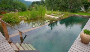 Natural pond pools