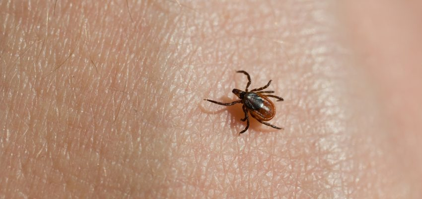 natural tick spray