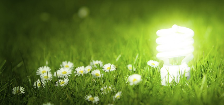 Glowing energy saving bulb in green grass.