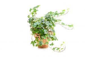 Green living tips