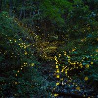 help fireflies