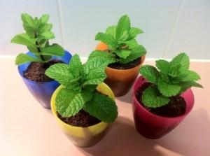 green home plants