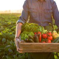 organic pesticide recipe