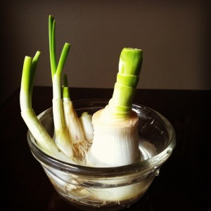 green living leeks