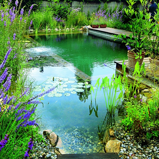 Brilliant natural swimming pools for Pond friendly plants