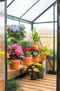 Olive Tiny House greenhouse