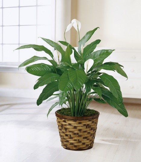 8 Plants That Make For A Clean And Happy Office