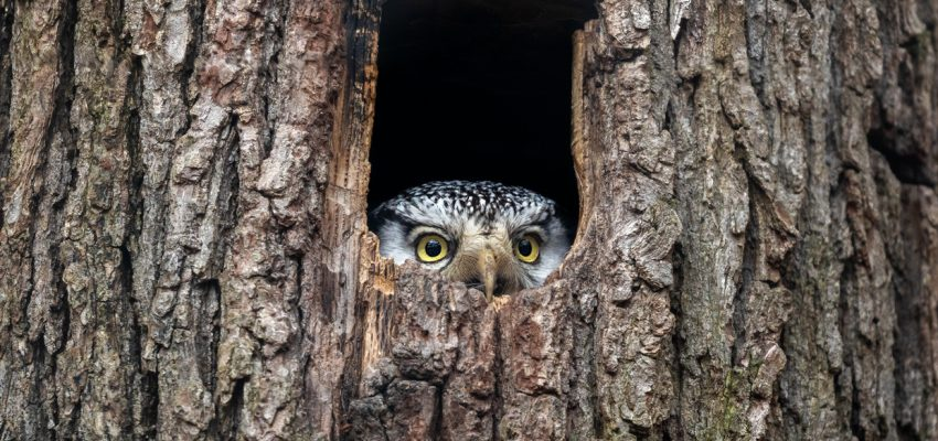 Protecting owls
