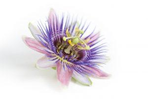 passion flower medicine