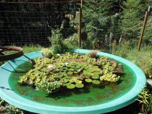 upcycled satellite dish pond