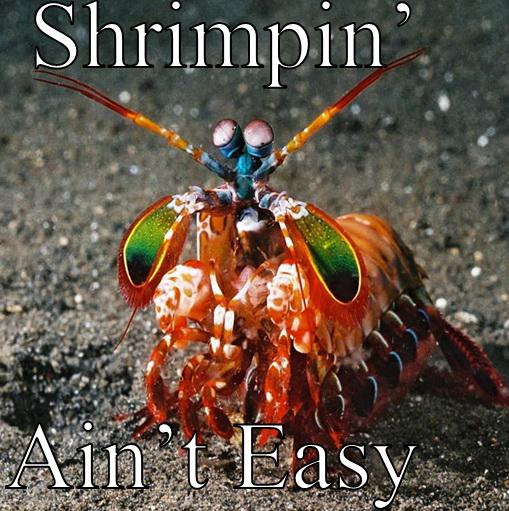 Green living: Mantis Shrimp