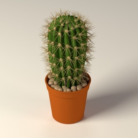 8 plants that make for a clean and happy office - What is cactus plant good for ...