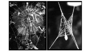 Zombie Spider Web