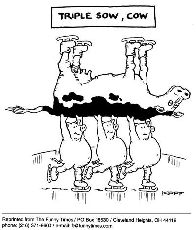 Tripple-sow-cow