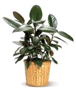 office plants ideas