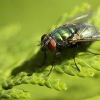 fly trap DIY