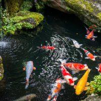step by step pond