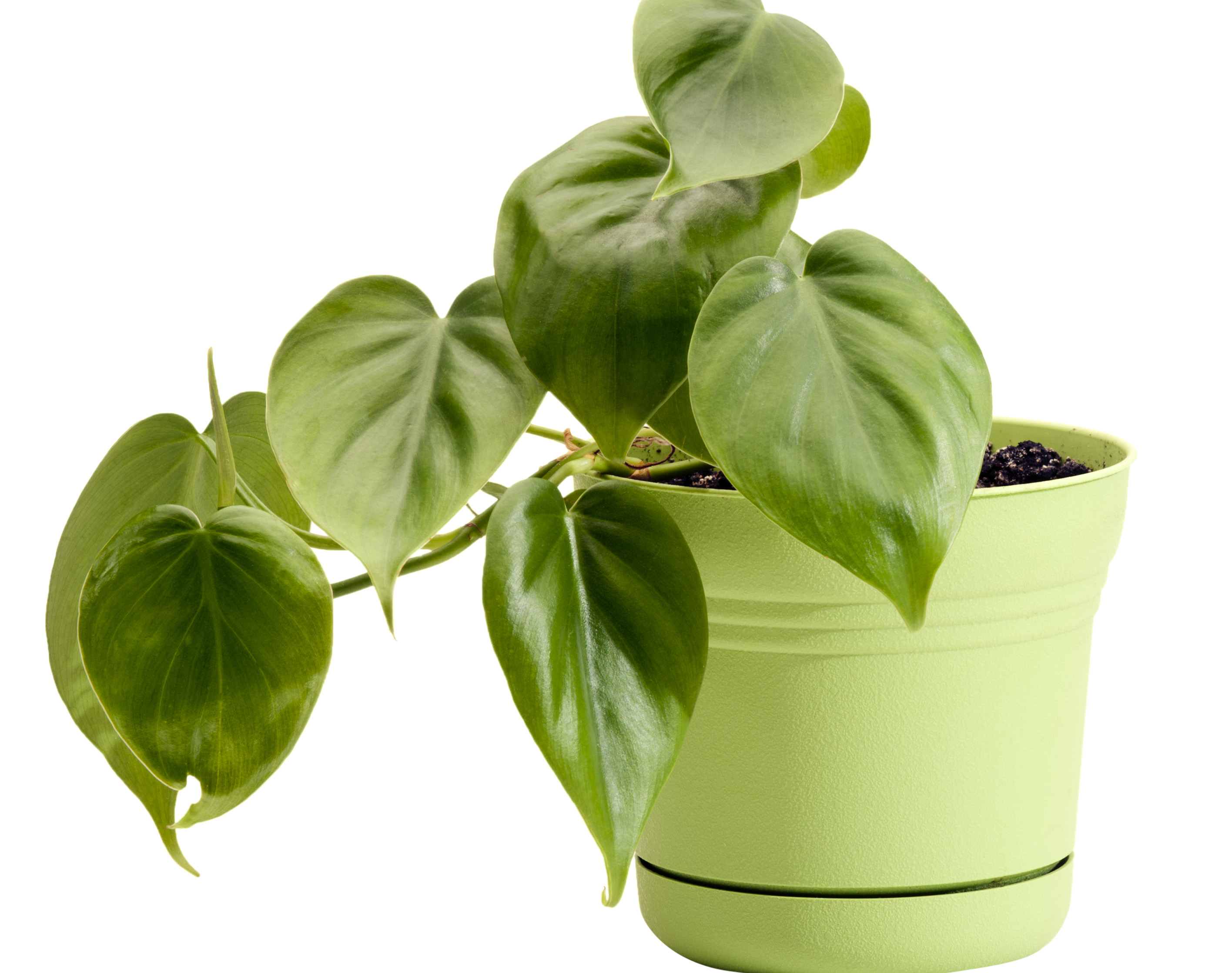 5 best plants for your office for Green plants for garden