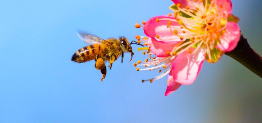 bee garden tips