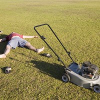 lawn alternatives