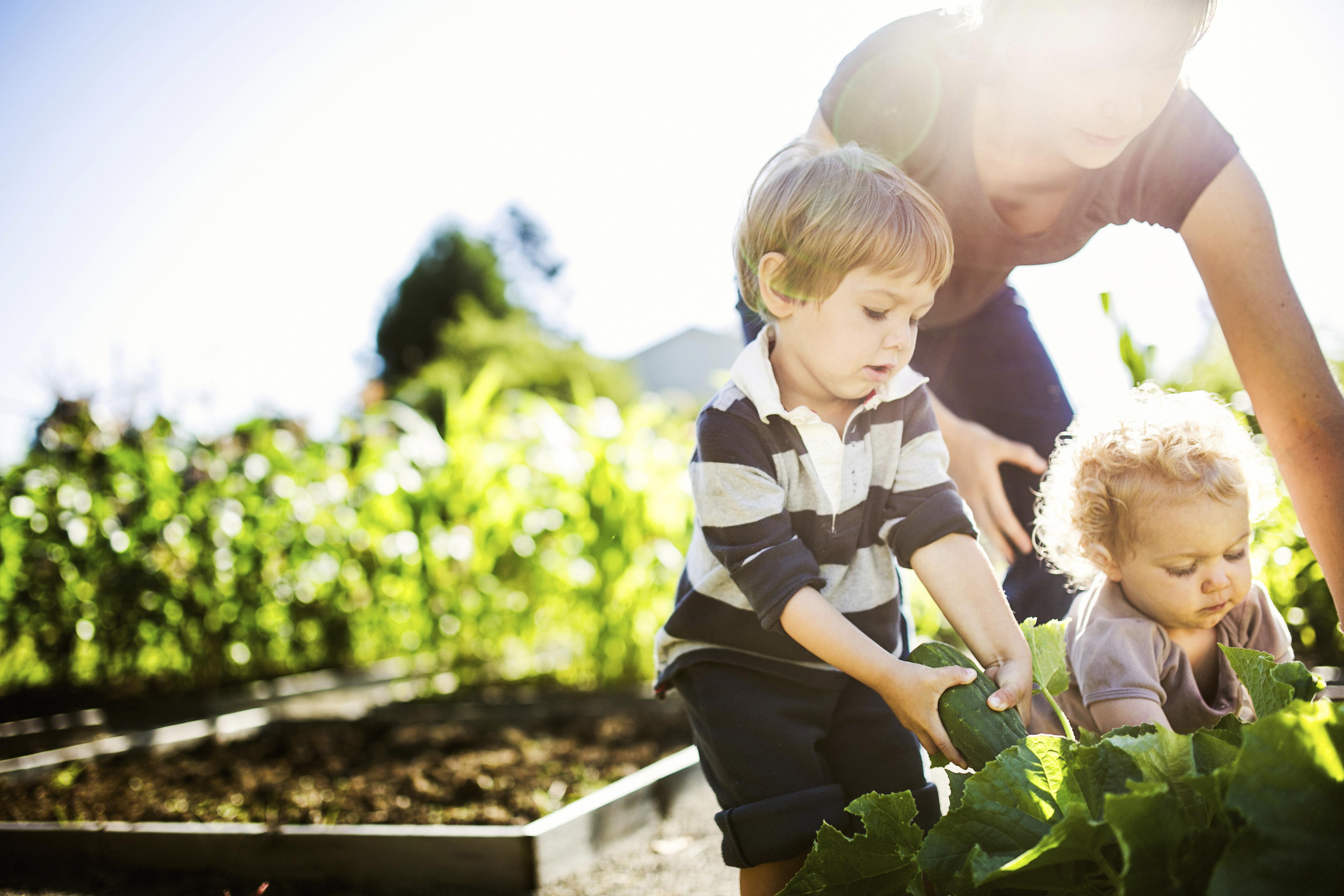 Diy Pesticides For Your Garden